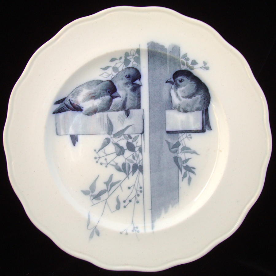 RARE Blue ORNITHOLOGY Plate ~ BIRDS 1870