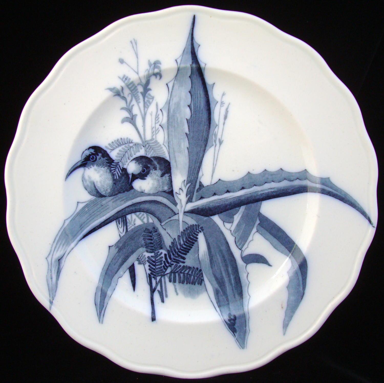 RARE Blue ORNITHOLOGY Plate ~ BIRDS 1870