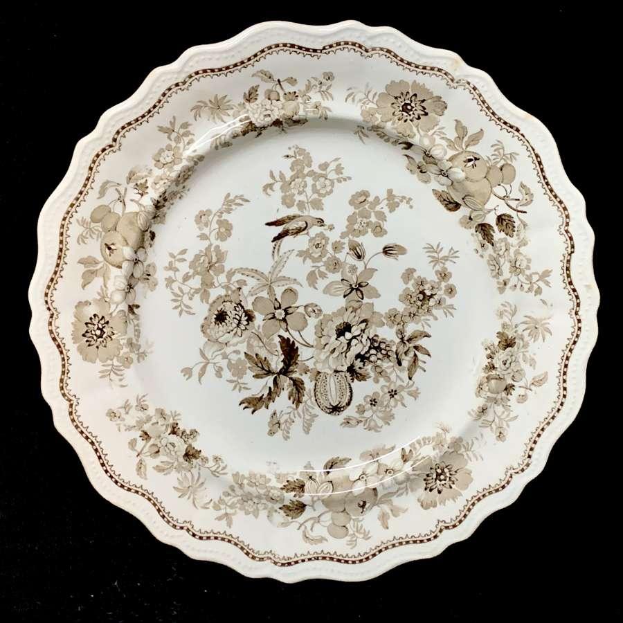 Superb Staffordshire Brown Transferware Plate ~ BRITISH FLOWERS 1830